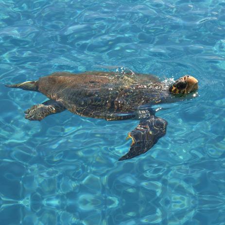 Zante Zakynthos turtle spotting