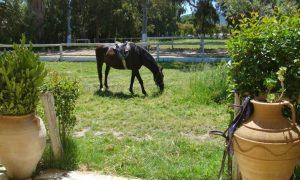 Horse Riding in Zakynthos Zante